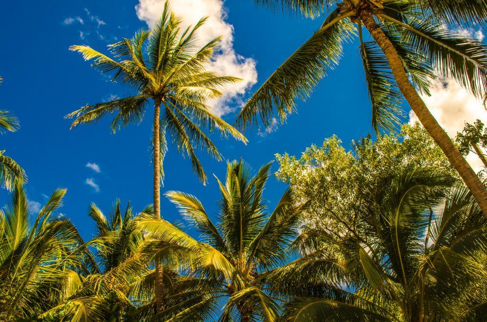 Sydney Palm Trees